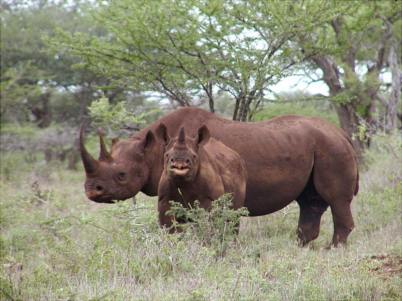 Illegal smuggling of rhino horns has grown after a 20-year decline.