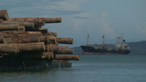 Logs from Papua New Guinea awaiting loading on ship for export.